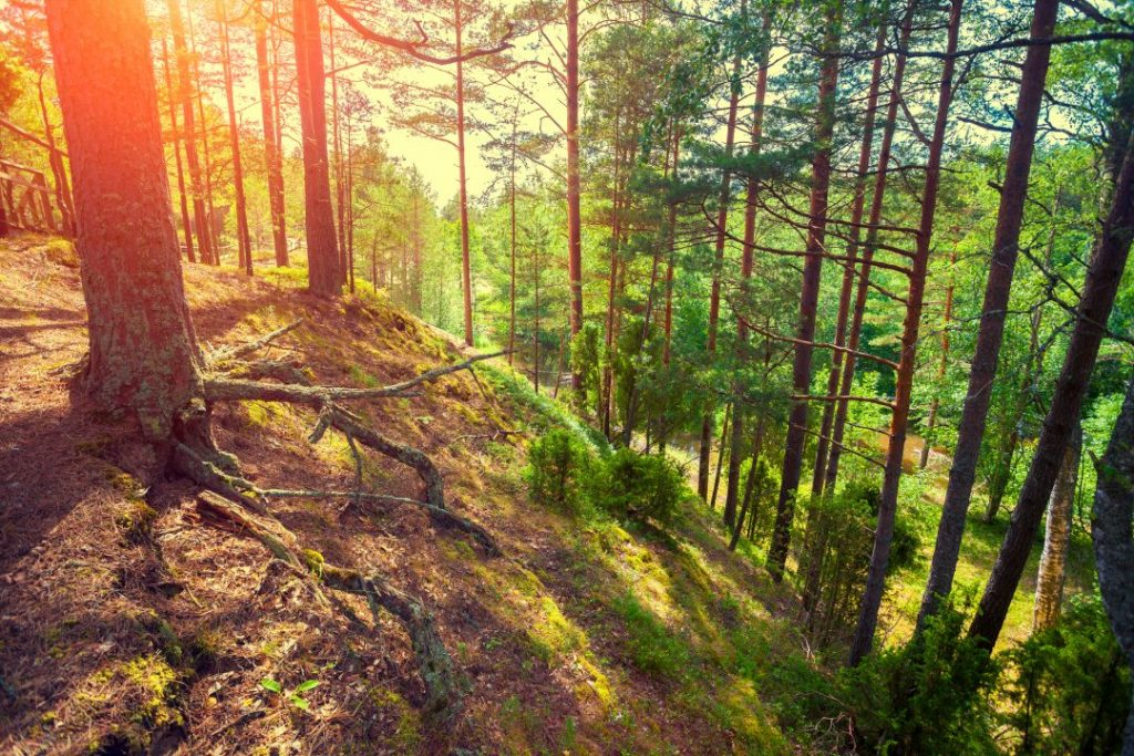 In the forest with steep Hill - Seeking God In Difficult Times