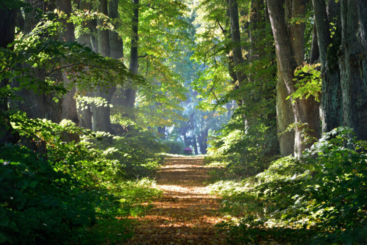 Road in a beautiful forest in the morning - seeking God in Difficult times