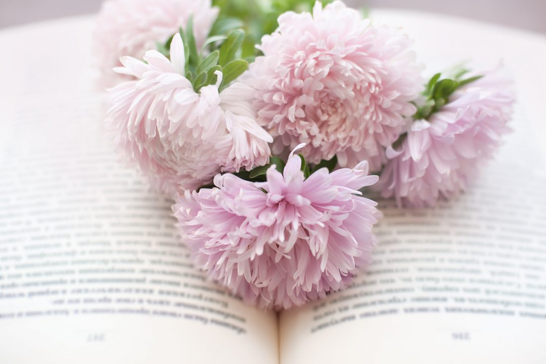 Pink flowers on open bible